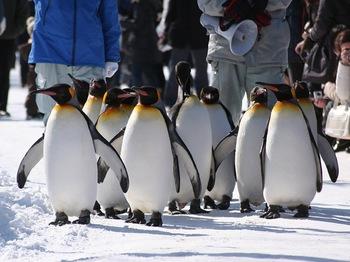 ペンギン001.jpg
