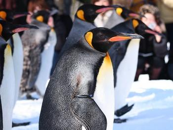 ペンギン003.jpg