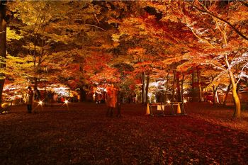 国営武蔵丘陵森林公園紅葉01.jpg