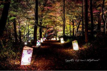 国営武蔵丘陵森林公園紅葉02.jpg