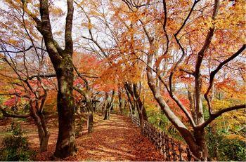 高岡古城公園紅葉02.jpg