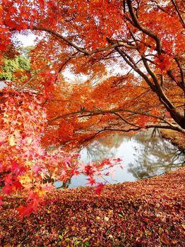 京都植物園04.jpg