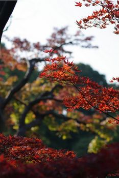 清澄庭園紅葉03.jpg