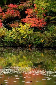 神戸市立公園03.jpg